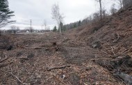 CLEAR CUTTING THE WESTERN WATERFRONT