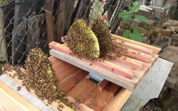 Beehives - Keeping Bees Part 2