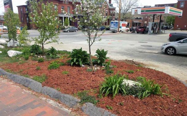 Edible Abundance Next to the 7-11 Parking Lot