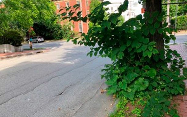 Now Appearing in Your Neighborhood:  Invasive Plants
