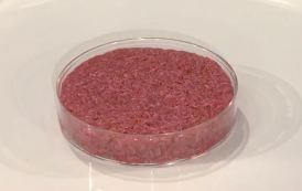 We Need Public Funding for Cultured Meat Research