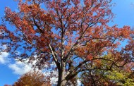 Do you know of a tree that should be on the Big Trees List?