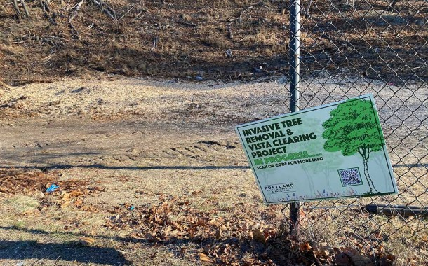 Western Prom Tree Removal Called 'Clear Cutting'