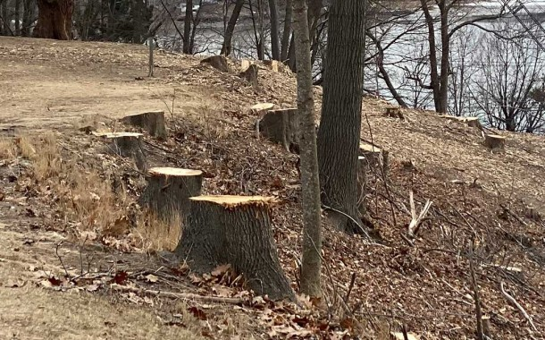 City removes invasive trees on the Western Prom