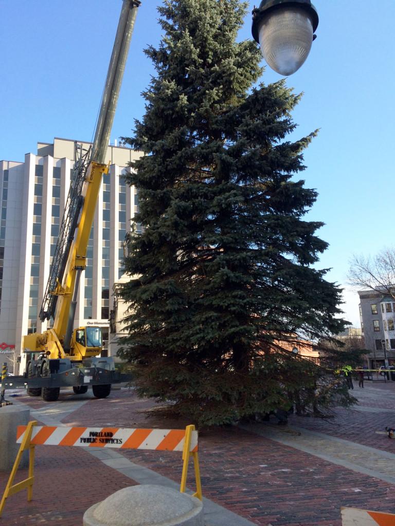 Tree-landing-at-Square