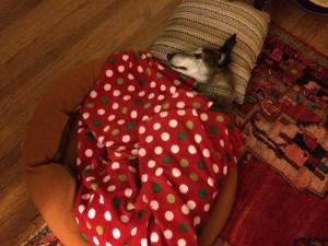 Dog Stays Warm for Winter