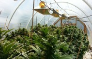 In Maine Pot is a Homegrown Business
