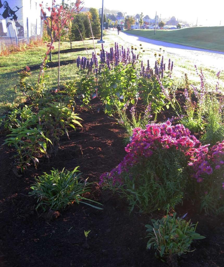 Get Creative: Bayside Trail pollinators garden.