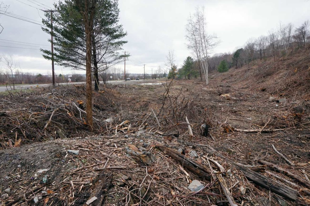 Clear cutting along western waterfront.