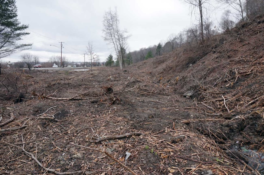 Clear cutting along Western Waterfront