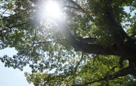 LA VIDA LOCAL- IRREGULAR NOTES ON WEST END LIFE: TREES