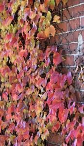 Fall foliage by Emilia Scheemaker.