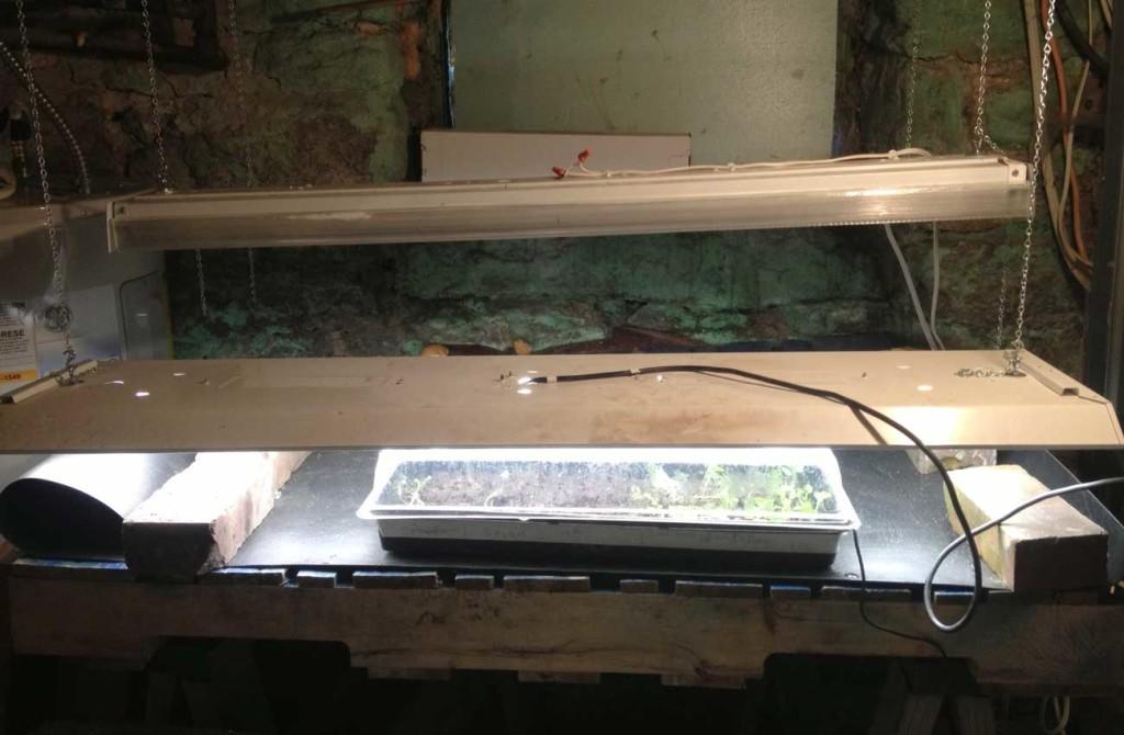 West End News: Amos Farm: seed starting: basement setup