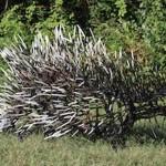 West End News: Porcupine sculpture