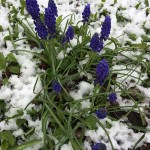 West End News: Flowers in Snow