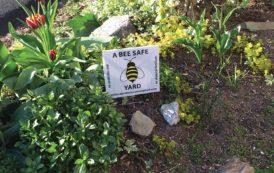Pesticide Ordinance City Council Hearing
