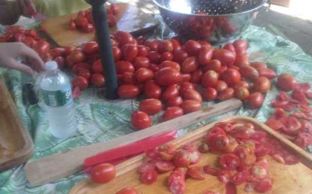 Tomato Weekend Like a Family Business