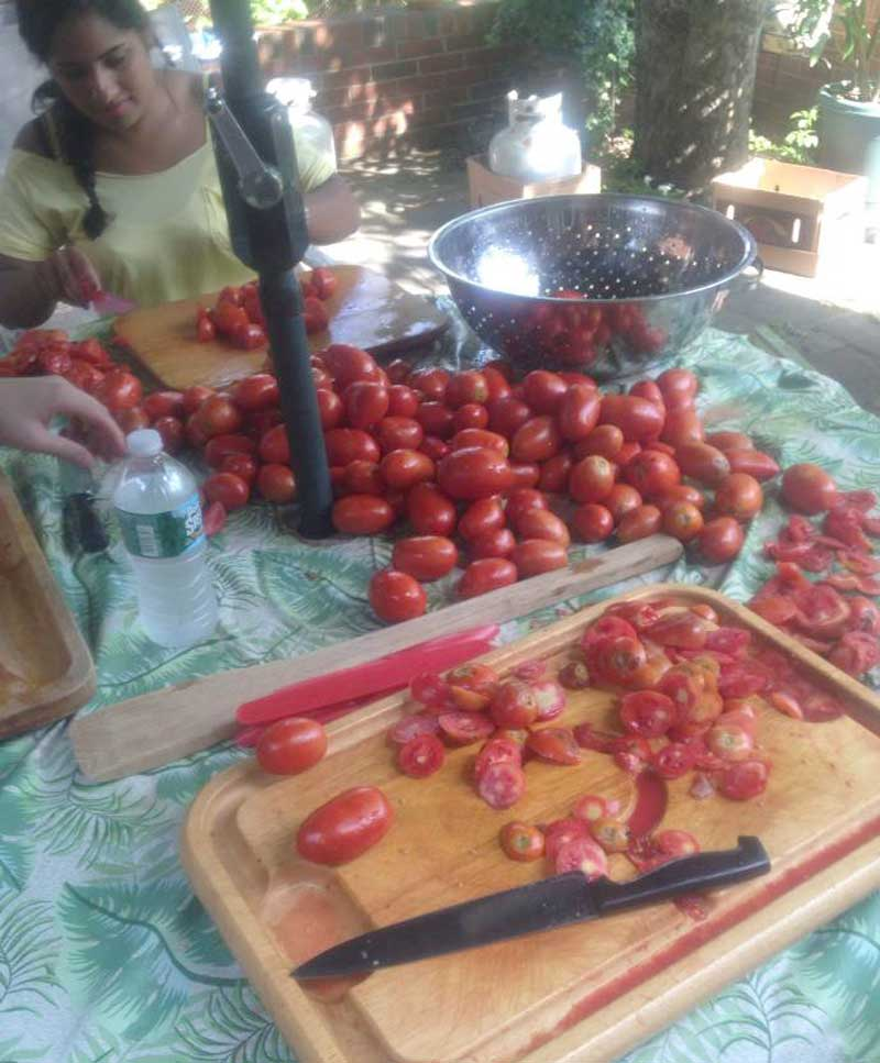 West End News - Tomato Weekend - Cutting tomatos