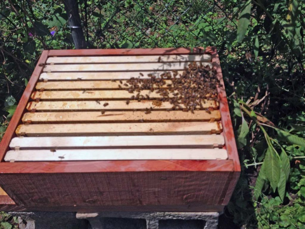 West End News - Animal Production - Langstroth beehive