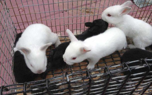 Animal Production - The Amos Farm
