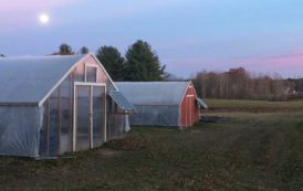 Growing Year-Round in Greenhouses with Replenova Farm - Peloton Posts