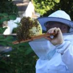 West End News - Keeping Bees - Christian Torp