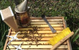 Keeping Bees Part I - Tools and Resources