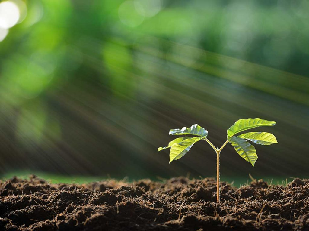 West End News - Early Stage Entrepreneurs Plant the Seeds for Success - seedling stock photo