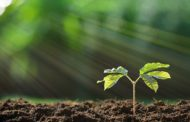 Early Stage Entrepreneurs - 4 Tips to Plant the Seeds for Success