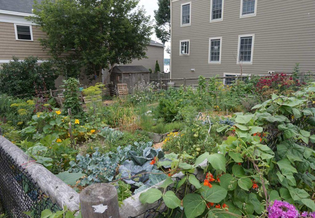 West End News - Wild Seed Project Kelly Corbin - WENA Garden