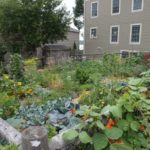 West End News - Wild Seed Project Kelly Corbin - WENA Garden