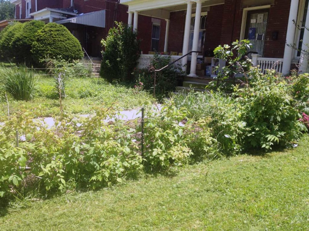 West End News - layering - raspberries wide with front yard