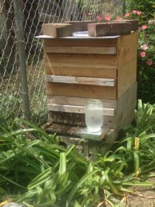 West End News - All A'Buzz Beehives - Langstroth beehive