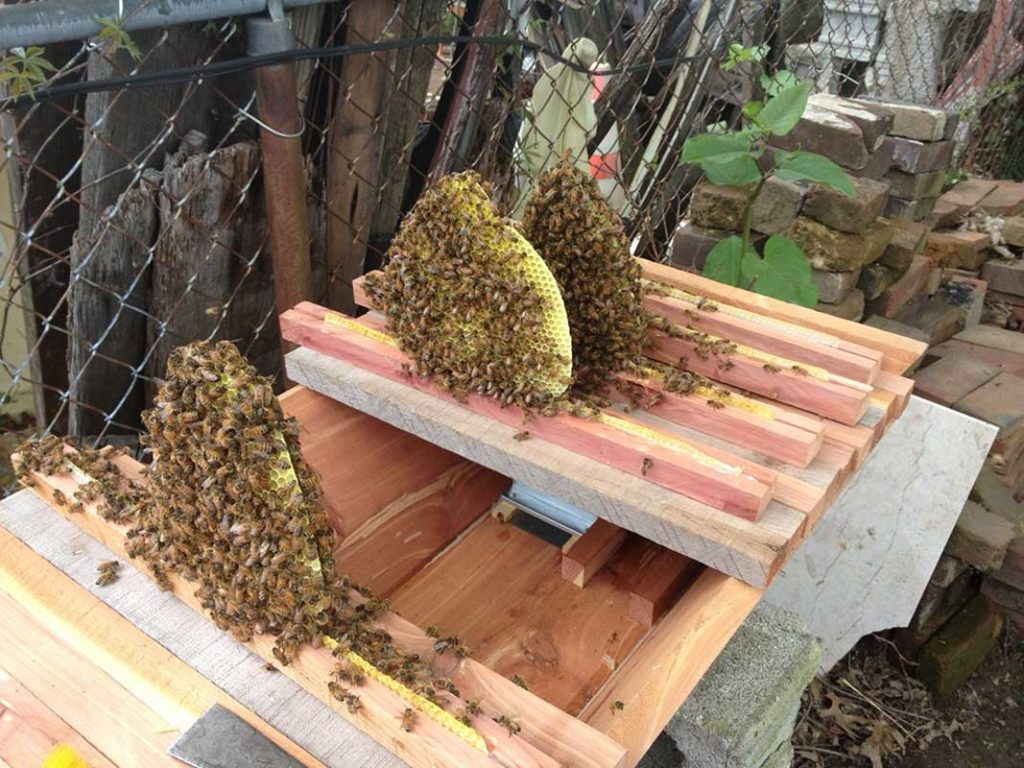 West End News - Top bar beehives
