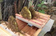 Beehives - Keeping Bees Part 2