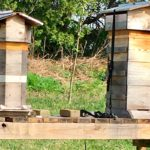 West End News - Warre beehives