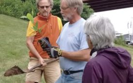 American Chestnut Returns to Portland