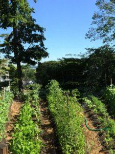 West End News - Accidental Gardener - Crescent St Garden