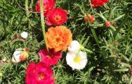 The Wonders of Gardening