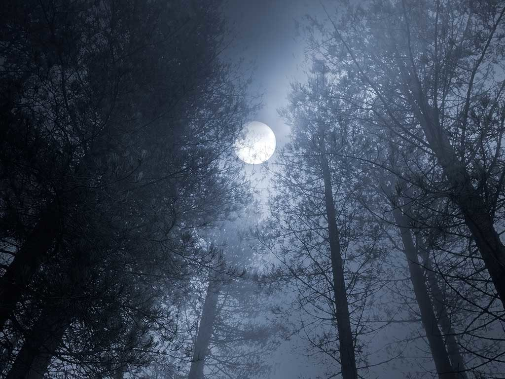 West End News - Astrological Forecast November 2017 - Moon over winter wood