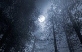 Winter Comes… It's Time to Decide - An Astrological Forecast for November 2017
