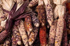 West End News - agriculture - Fall - corn