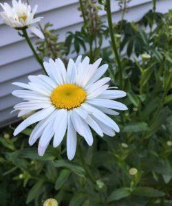 West End News - Organic Lawn & Garden - Wildflower