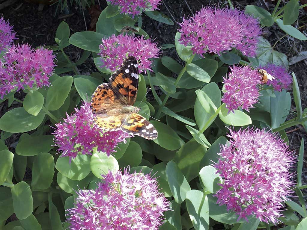 West End News - Organic Lawn & Garden - Butterfly and Bee