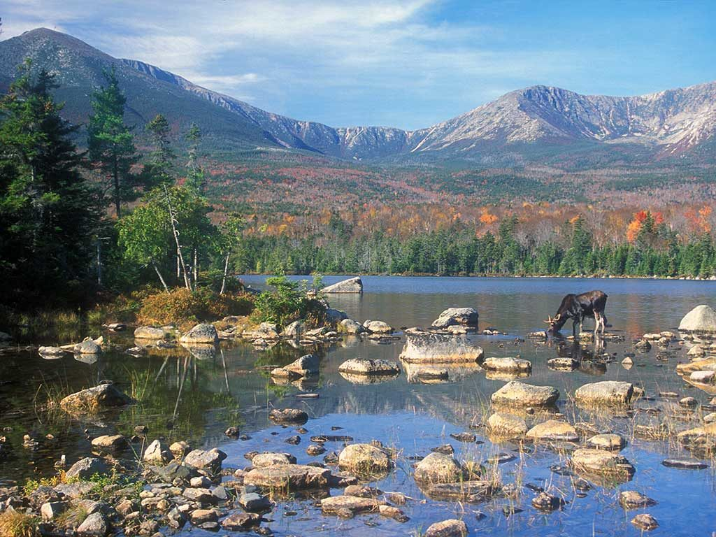 West End News _ Appalachian Trail_Moose and Katahdin
