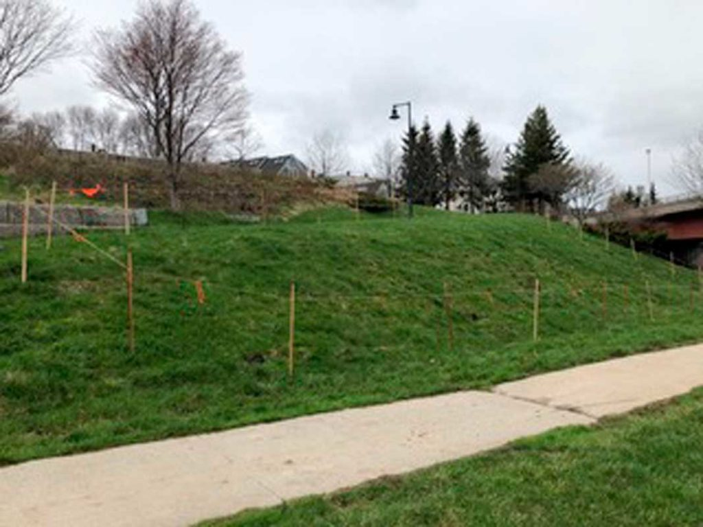 West End News - Growing Harbor View Park - The Meadow to be by Kent Redford