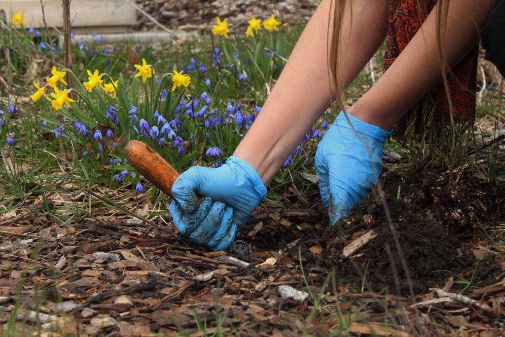 West End News - Soil Lead awareness - garden test sample being taken