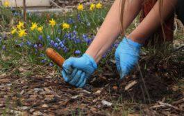 Ready to garden? Avoid the soil lead. Get a free soil test!