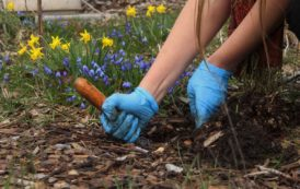 Ready to garden? Avoid the soil lead. Get a free soil test!