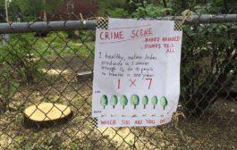 Protect Portland's Trees - Bright Ideas No. 13